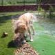 Überhitzungsgefahr nicht nur im Sommer: Ganzjähriger Hitzeschutz für Heimtiere