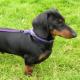 Tierpsychologie: Dem Fehlverhalten der Heimtiere auf der Spur
