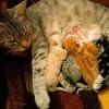 Katze bringt Hund zur Welt