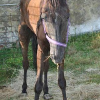 Besitzer ließen Pferd fast verhungern – Stute hatte 50 Zentimeter lange Hufe