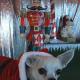 Vorsicht bei Weihnachtsgeschenken für Haustiere!