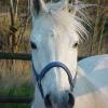Genitalkrebs bei Pferden: Mögliche Ursache entdeckt
