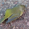Experten erklären mysteriöses Vogelsterben