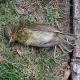 Weltweites mysteriöses Massen-Tiersterben: Schon 30 Orte davon betroffen!