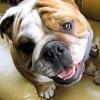 Übergewicht beim Hund: Behandlung und Prophylaxe