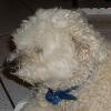 Die größte Facebook Fanpage eines Hundes?