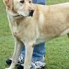 """Versicherung empfiehlt Hundehalterin Tötung: """"Zeitwert zu gering, Reparaturaufwand nicht zu rechtfertigen"""""""