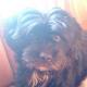 Hundeentführung: Wer weiß etwas über Luckys Verbleib?