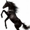 Großer Besucherandrang bei Pferd & Jagd, Europas größter Messe für Reiter, Jäger und Angler
