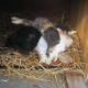 Tiertragödie: Abnahme durch den Amtstierarzt kam für einige Vierbeiner zu spät