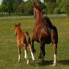 Pony und Fohlen sexuell misshandelt