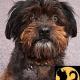 perro negro – Geschenke für Mensch und Hund