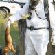 Mehr Tierheimplätze als benötigt, trotzdem: Tod besser als enge Käfige für PETA