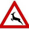 Vorsicht: Verstärkter Wildwechsel im Herbst
