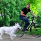 Bello und der Drahtesel: Tipps zum Fahrradfahren mit Hund