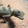 Mahlzeit: Schmuggler wollte 49 lebende Reptilien verspeisen