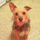 Jobs mit Hund: Das erste Jobportal mit Schwerpunkt Hunde am Arbeitsplatz