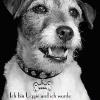 """""""Ich bin Uggie und ich wurde adoptiert"""": Weltbekannter Filmhund wirbt für Tierschutz"""