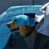Gefahr Hitzschlag: Hunde nicht im Auto lassen!