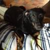Hündin mit Rattengift durch Hundehasser vergiftet