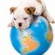 Regelungen zur Einreise mit Heimtieren in die Europäische Union