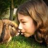 Lebende Kaninchen gehören nicht ins Osternest