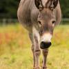 Karlsruher Tierfreunde laden ein: Advent im Stall