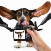 Tiere filmen leicht gemacht