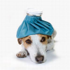 Krankenversicherung für den Hund: Ist das sinnvoll?