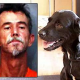 Harte Strafe für Hundemörder: 10 Jahre Haft