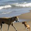 Urlaub mit Hund in Dänemark: Das Risiko reist mit