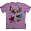 Ohne Brennessel keine Schmetterlinge