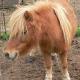 Irrer Tierquäler enthauptet Zwergpony und verhöhnt Tierfreunde
