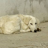 Tierschutz im Urlaub