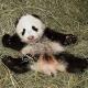 Pandabub heißt Fu Bao