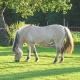 Grundlegendes zum Pferdefutter