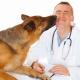 Infrarot in der Tiermedizin