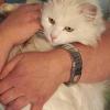 Arthrose bei der Katze