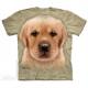 Unseriöser Hundehandel: Augen auf beim Welpenkauf!