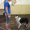 Wie sich die Aufmerksamkeit von Hunden im Laufe des Lebens verändert