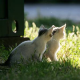 Kleine Heimtiere leiden unter großer Hitze