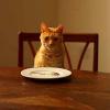 Wie wichtig die richtige Katzenernährung ist