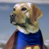 Aktion Heldenhunde: Blindenhunde wie Max brauchen Deine Hilfe