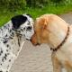 Versicherungen für Tiere: Was ist notwendig, empfehlenswert oder überflüssig?
