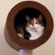 Unterhaltungsprogramm für Katzen: So fühlen sich Hauskatzen wohl