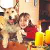 Sicher durch die Weihnachtszeit mit Hund und Katze: Do's und Dont's für Tierfreunde