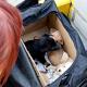 Tierschutzorganisationen drängen auf Kennzeichnungs- und Registrierungspflicht beim Welpenhandel
