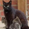 Auch kastrierte Katzen fangen Mäuse!