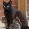 Katzennachwuchs unerwünscht