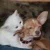 Unterstützung bei Arthrose bei Hunden und Katzen